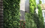 هیدروپونیک; نسل جدید دیوار های سبز Greenwall